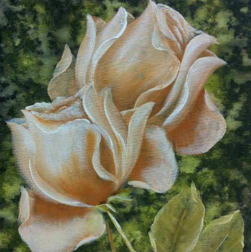 Botões de Rosas 500